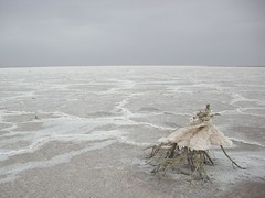 Lake Eyre South: A Massive 'Lake' Of Salt