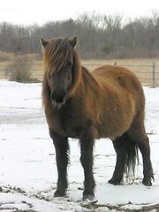 Winter Pony - by Barbara L. Hanson
