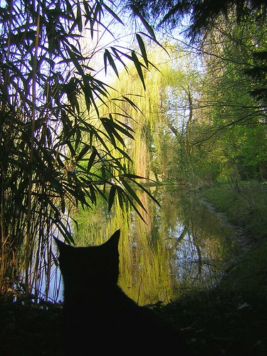 cat and willow tree