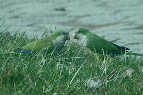 Parrots One