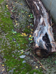 ...Invierno... (.-J-.) Tags: musgo textura tronco