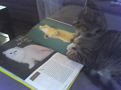 "Furio reading ""Cat Fancy"" (2 of 3)"