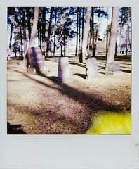 Old graves in a park (*laikanet*) Tags: park trees stain cemetery grave yellow polaroid walk tombstone utata expiredfilm instantfilm thursdaywalk utata:project=tw52