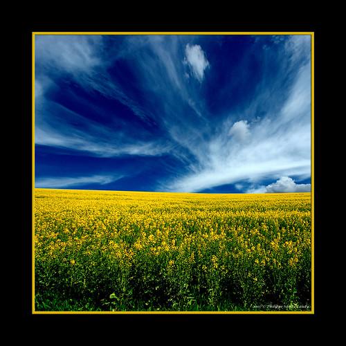 Yellow under blue