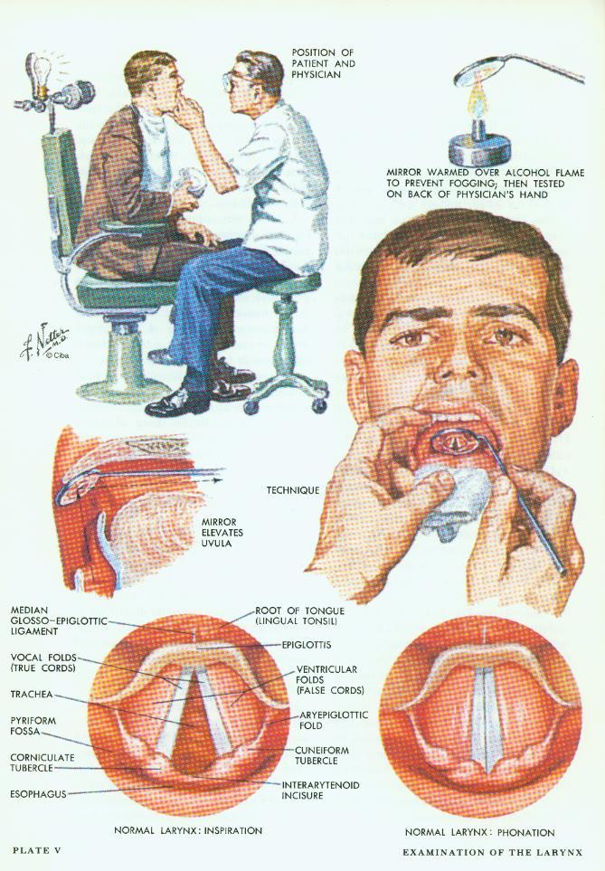 larynx anatomy netter - photo #8