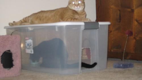 cat contraption 004