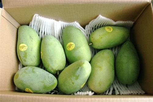 Zambales Mangoes - 1