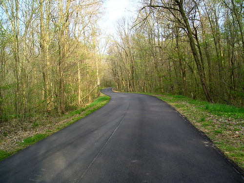 Main Forest Road