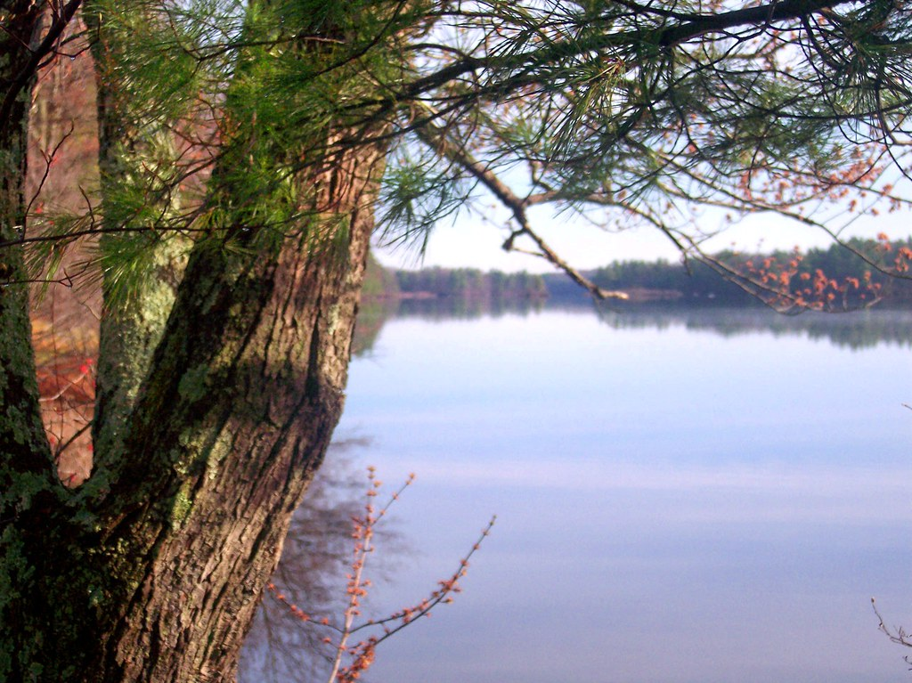 Lake White Best