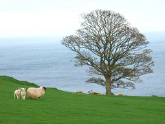 Ireland: green, blue... and sheep (bass_nroll) Tags: blue ireland green canon landscape explorer explore sheeps maggio 2007 antrim g7 naturesfinest ireland2007 200757 exploremay2200757 explorermay2200757