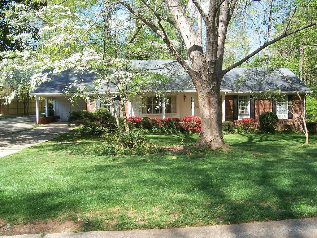 Dogwoods just finishing bloom, Stoneybrook Estates, Cary, NC