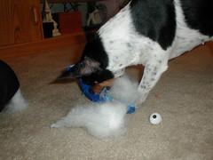dog eye puppy toy rat terrier eyeball greeblie