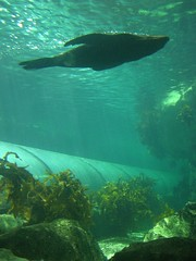 Seal Floating Over The Viewing Tube