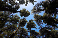 Newlands Forest - by ifijay