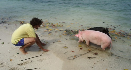 Me playing with the pigs