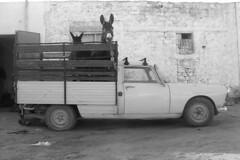 Peugeot 404 (Richard Reynolds) Tags: truck tunisia donkeys donkey farmer peugeot