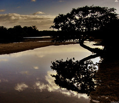 reflexo da solidao / reflexion of the solitude (ValerioFigueiredo) Tags: brazil sky praia beach nature brasil solitude natureza reflexo pernambuco paisagens portodegalinhas maracape splendiferous dscp93a cmeradeourobrasil