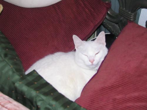Artemis Relaxing