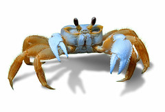 Crab_xLR