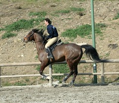 IMG_2600 (montalgeto) Tags: horse hermione gallop emiliana