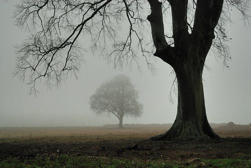 Misty trees - Ditcham