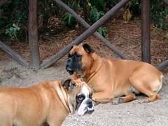 DSCF0306 (Riccardo1975) Tags: dog cane achille ettore