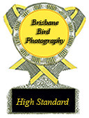 BrisbaneBirds
