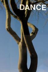 Dance (O Caritas) Tags: arizona reflection tree window mesa nikoncoolpix8800 dancestudio westmainstreet strollwithesther dscn5045