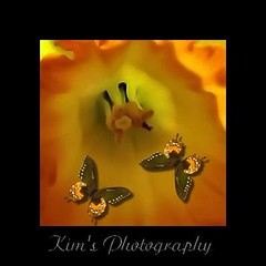 Flower (~Kim's Picture Gallery~) Tags: flower nature butterfly cool pretty supershot superbmasterpiece flickrdiamond ~beautywithin~