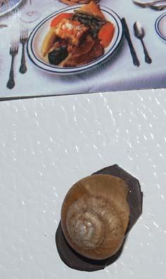 snailmagnet