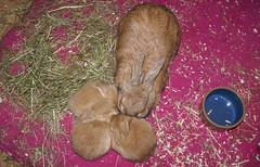 Happy family (Sjaek) Tags: sleeping pet pets cute rabbit bunny bunnies sony adorable fluffy pip rabbits alpha dslr