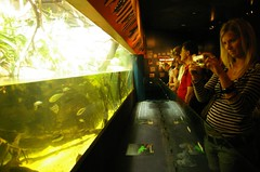Aquatic enclosure with patrons @ Sydney Aquarium - by Vanessa Pike-Russell