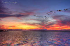 Flying Towards the Sunset (macmir) Tags: sardegna pink sunset red sea sky italy parco sun seascape nature water colors birds silhouette skyline clouds reflections fly flying wings europe italia tramonto nuvole mare sardinia purple sale sony flamingo horizon flight rosa flamingos cybershot natura down shades ali uccelli volo seven cielo ripples sole acqua viola rosso colori riflessi saline dsc cagliari salina magico sette orizzonte volando poetto stormo h5 fenicotteri naturalmente naturesfinest casteddu quartu karalis sfumature fenicottero impressedbeauty macmir maurocaddeu