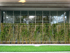 Hedge and green sidewalk (grpmpk) Tags: green hedges