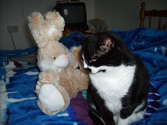 Buster the bunny arrives (patchworkgandalf) Tags: firstmeeting busterthebunny pastathecat itllbefinethereisnobell