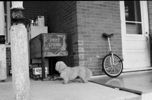 poodle and unicycle