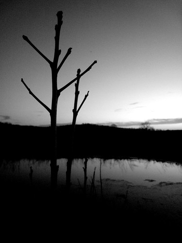 middlefield pond 006