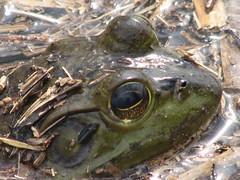 Bullfrog Oxbow 032607