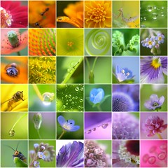 (sakura*aya) Tags: rainbow group impressedbeauty 1on1colorful 1on1colorfulphotooftheday 1on1colorfulphotoofthedaymar2007