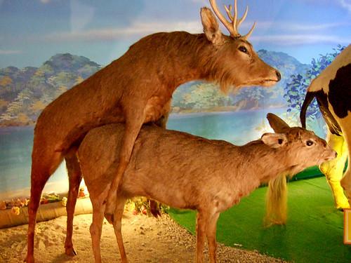 dos ciervos disecados haciendo el amor