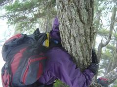 Tree Huggin'