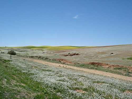 Spring in Jordan
