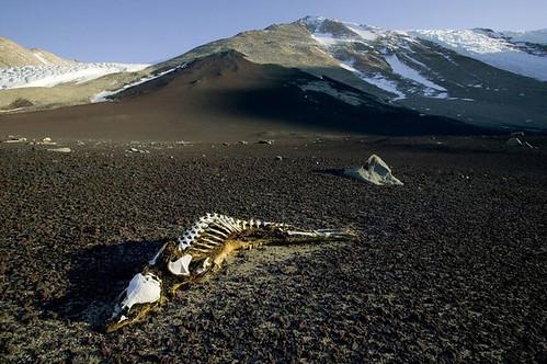 452029698 a460cec104 Dry Valleys of Antarctica