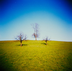 Three Trees (explored) (schoeband) Tags: tree 120 6x6 nature mediumformat switzerland holga interestingness top100 fujicolorsuperia100 fujicolorreala100 gipfoberfrick aplusphoto