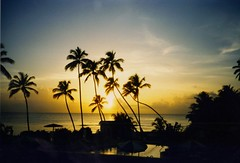 Barbados Sunset (Carol Munro was rgtmum) Tags: ocean sunset sea beach bay 500v20f palmtrees kings palmtree tropical barbados caribbean kingsbeach blueribbonwinner tropicalsunset 10faves flickrestrellas quarzoespecial