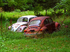 Love Bugs? (Tabbie-cats) Tags: old red vacation white color tree green field car vw rural canon wow bug interesting weeds rust automobile decay kentucky ky country beetle explore odd forgotten unusual herbie volkswagon rockyhill interestingness4 i500 anawesomeshot impressedbeauty ultimateshot superhearts