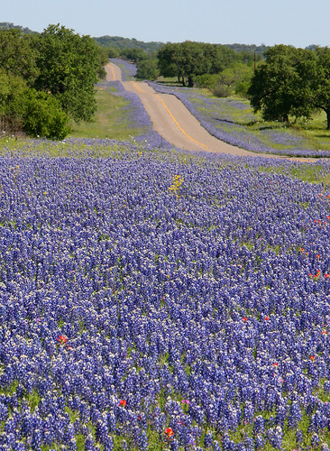 Hill Country in blue...