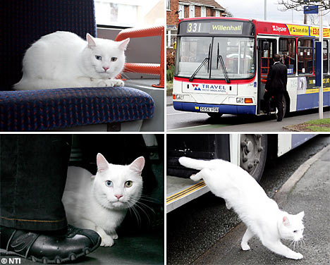 cat on bus