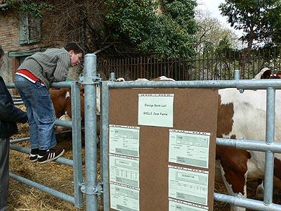 paul sur barrière vache.jpg