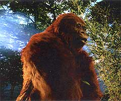 Gigantopithecus blacki.. the real King Kong from the Stone Age